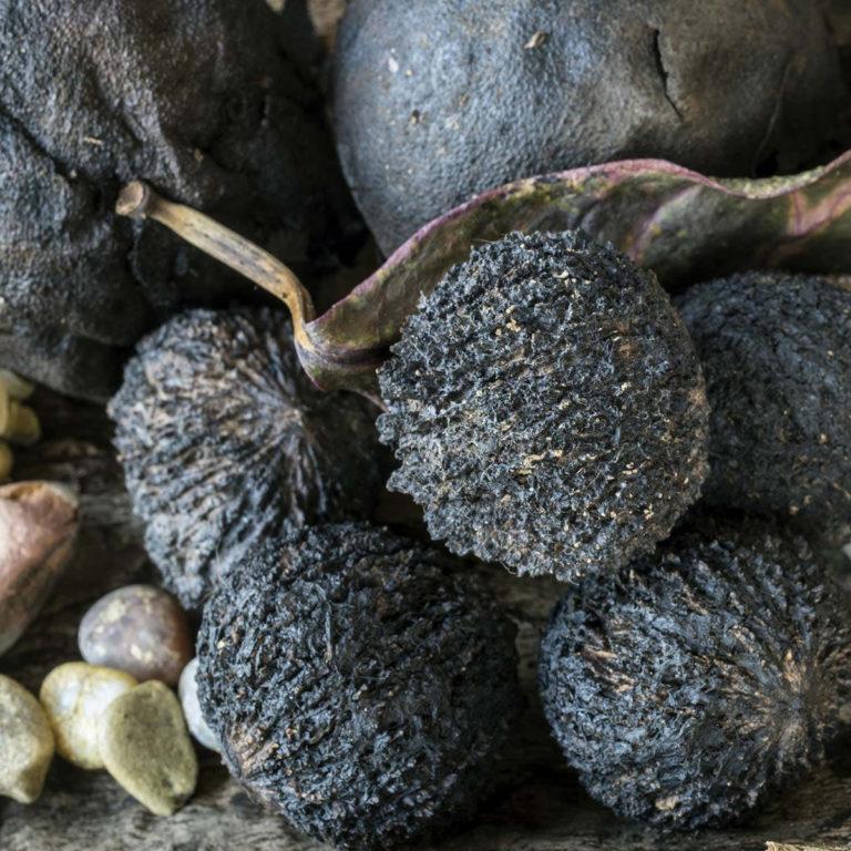 JUODASIS RIESUTAS – Kaip atsikratyti parazitų vartojant juodojo riešutmedžio riešutus